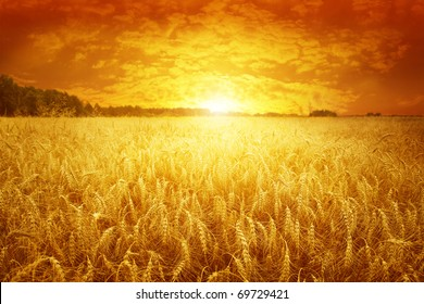 Golden sunset over wheat field.