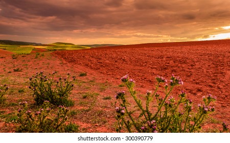 Golden sunset,threatening storm over the fields
