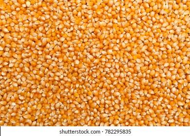Golden sweetcorn, Popcorn, texture, Background. Dried raw farm corn harvest.