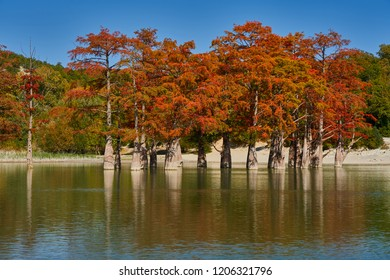 Golden Taxodium distichum stand in a gorgeous lake against the backdrop of the Caucasus mountains in the fall. Autumn. October. Sukko Valley. Anapa. Krasnodar region. Russia.