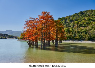 Golden Taxodium distichum stand majestically in a gorgeous lake against the backdrop of the Caucasus Mountains in the fall. Autumn. October. Sukko Valley. Anapa. Krasnodar region. Russia.