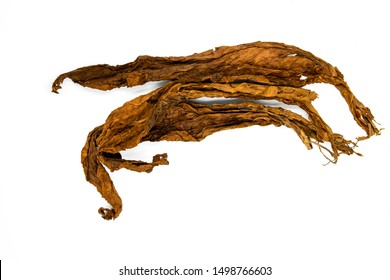 Golden tobacco leaves on white background. Tobacco whole leaf top view photo. Rustic raw material for cigarettes and cigars. Smoking tobacco leaf. Dry cured tobacco leaf. Cigarette industry concept