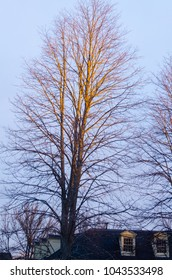 golden tree with no leafs