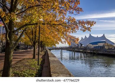 Golden trees along Baltimore Inner Harbour