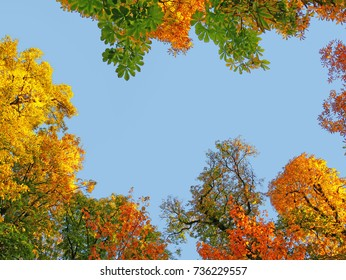 Golden treetops in autumn, colorful tree canopy against the blue sky.