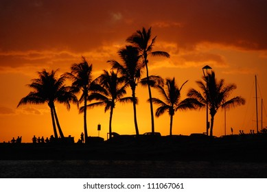 Golden Tropical Sunset - The Sun sets in the western sky in a blaze of orange behind silhouetted palm trees in Hawaii.