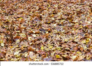 Golden vibrant fall leaves on the ground in a forest