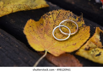 Golden wedding rings on a autumn leaf close-up.