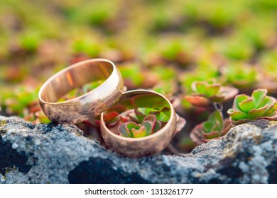 Golden wedding rings on on small succulents