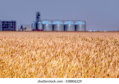Golden wheat field and  Agricultural Silos, Storage and drying of grains, wheat, corn, soy, sunflower