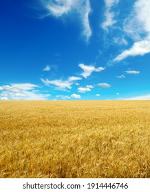 Golden wheat field and blue sky with cirrus clouds.