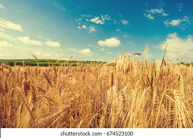 Golden wheat field with blue sky in background. Summer landscape with wheat field. Toned. - Shutterstock ID 674523100