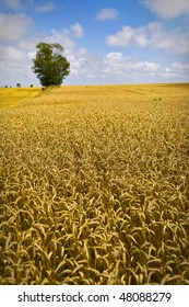 Golden Wheat Field With Tree and Clouds