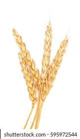 golden wheat isolated on white background