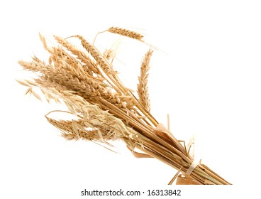 golden wheat and studio isolated