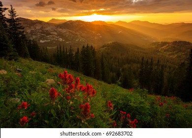 Golden wildflower sunset in the Wasatch Mountains, Utah, USA.