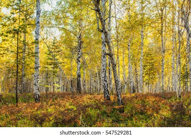 in the golden woods in autumn in Siberia