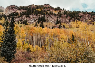 Golden yellow aspen trees and pine trees in the Rocky Mountains during the fall at Maroon Bells in Aspen, Colorado, USA
