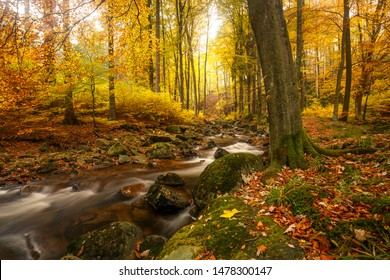 Golden yellow autumn colors in the Harz mountain forest with a small stream by the name of Ilse