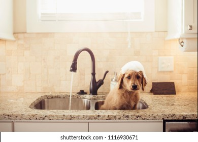Goldendoodle Puppy getting sink bath .