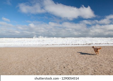 A Goldendoodle runs on the sand toward an icy snow bank along the Lake Michigan shore at Montrose Dog Beach in Chicago
