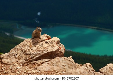 Golden-mantled ground squirrel in Yoho National Park, Canada.