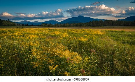 A goldenrod meadow in Lake Placid at sundown in the High Peaks region of the Adirondacks. Mt. Marcy and Algonquin Peak can be seen in the background.