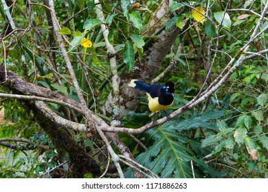 Goldfinch on a branch in the Iguazu National Park