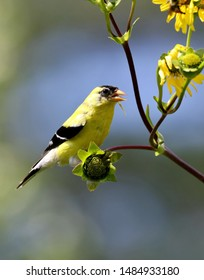 A goldfinch perched on a branch.
