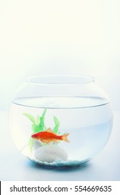 Goldfish in an aquarium isolated on white background