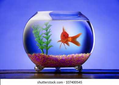Goldfish in a bowl with bright stones and a green plant