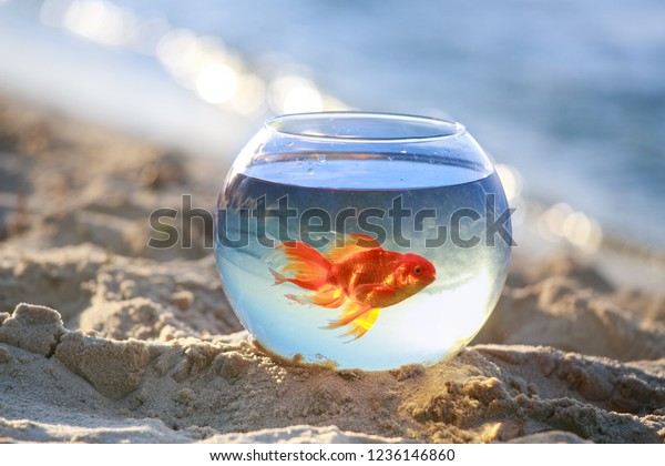 Goldfish Bowl Fish Float Aquarium Beautiful Stock Photo Edit Now 1236146860