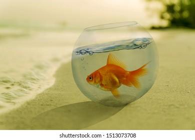 Goldfish in a bowl inside beach. photo manipulation