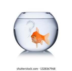 goldfish in bowl with question mark bubbles lonley captivity fish concept isolated on white background