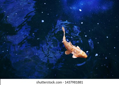 Goldfish in dark blue glowing water, red and yellow japanese koi carp swims in pond close up, abstract golden fish constellation, astrology symbol, artistic galaxy stars light in night sky, copy space