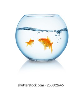 goldfish family in a fishbowl on white background