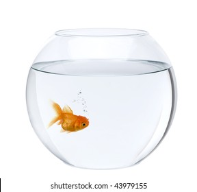 Goldfish in fish bowl, in front of white background, studio shot
