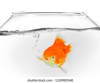 Goldfish in fish bowl with waterdrops bubbles on white background