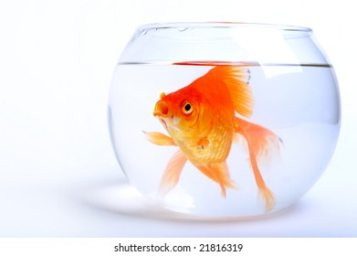 A goldfish in fishbowl on white background