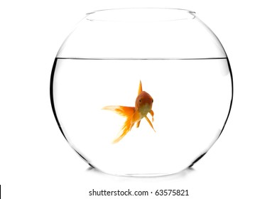 goldfish in a fishbowl on white background