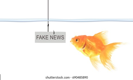 Goldfish are going to eat bait, there are fake news messages on the hook / bait for fake news.