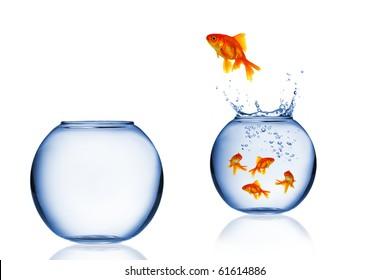 Goldfish jump into the aquarium