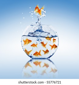 Goldfish jump into the aquarium with water.
