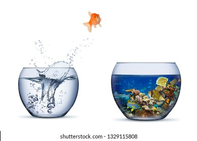 goldfish jump out of bowl into coral reef paradise fish change chance freedom concept isolated on white background