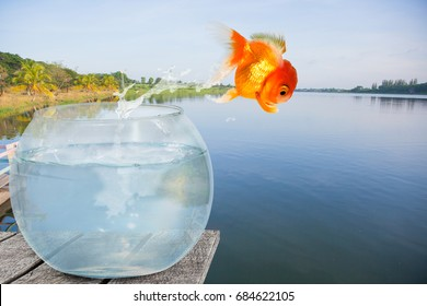 Goldfish jump out of a clear glass bowl with splash water. Into a vast and peaceful lake.  The Concepte of Courage in deciding to jump off an awkward life to a new life at peaceful freedom.