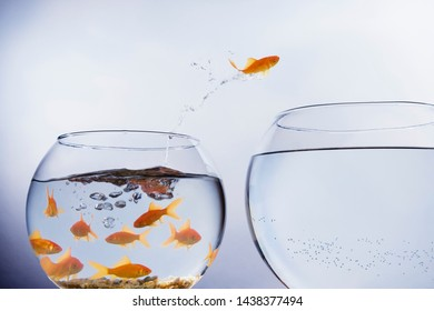 A Goldfish jumping out of a small crowded bowl into a larger empty bowl