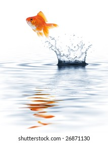 goldfish jumping out from water creating splash