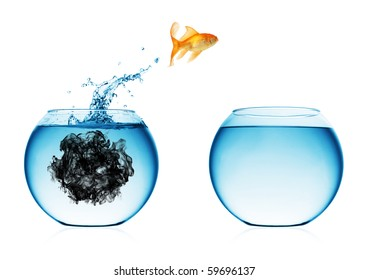 A goldfish jumping out of the water to escape to clear water.
