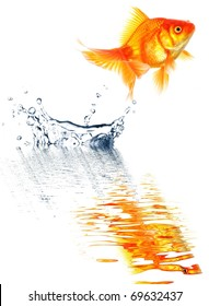 goldfish jumping with water splash isolated on white background