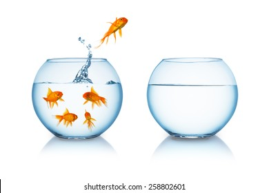 goldfish jumps in to a fishbowl in to liberty